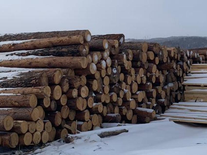 Два случая незаконной рубки выявлено на месте пожара в Верхне-Читинском лесничестве