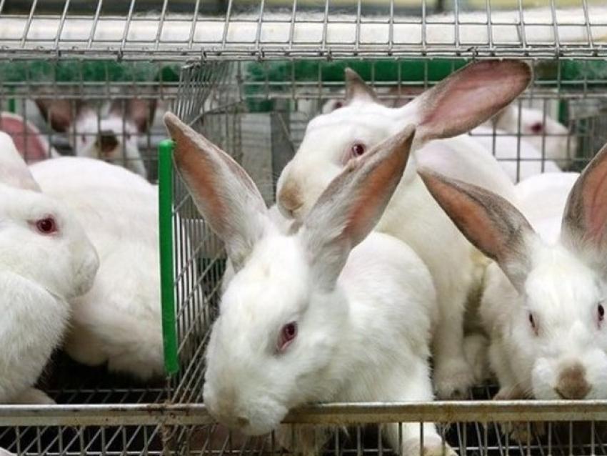 Забайкалье стало четвёртым регионом в стране, где создали крупную кролиководческую ферму