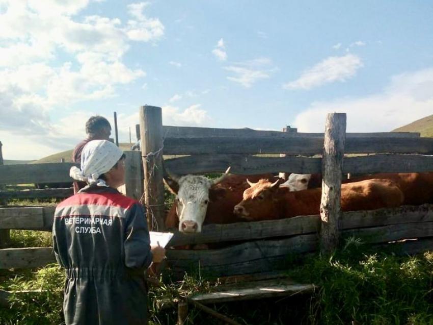 Необходимое количество вакцины против опасного заболевания животных поступит в Забайкалье