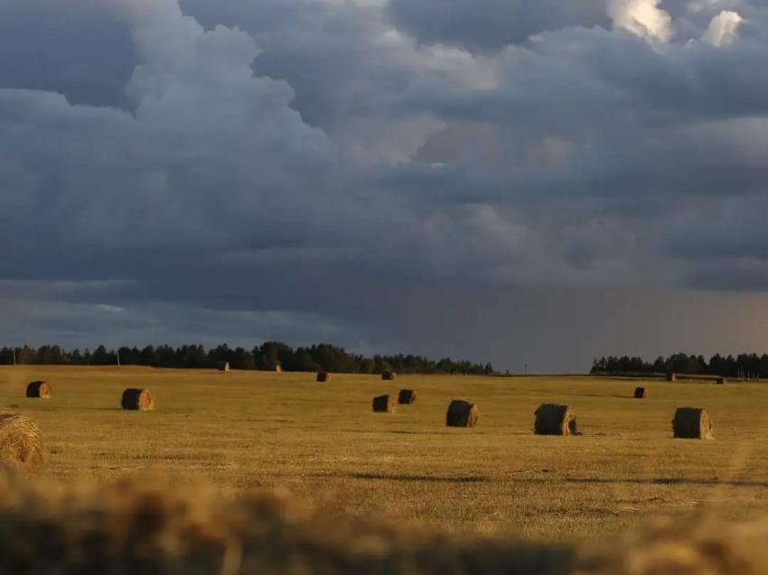 Забайкалье обеспечит якутских фермеров сеном