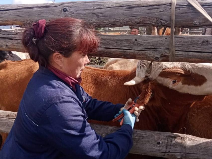 Осенние ветеринарно-профилактические мероприятия начались в Забайкалье