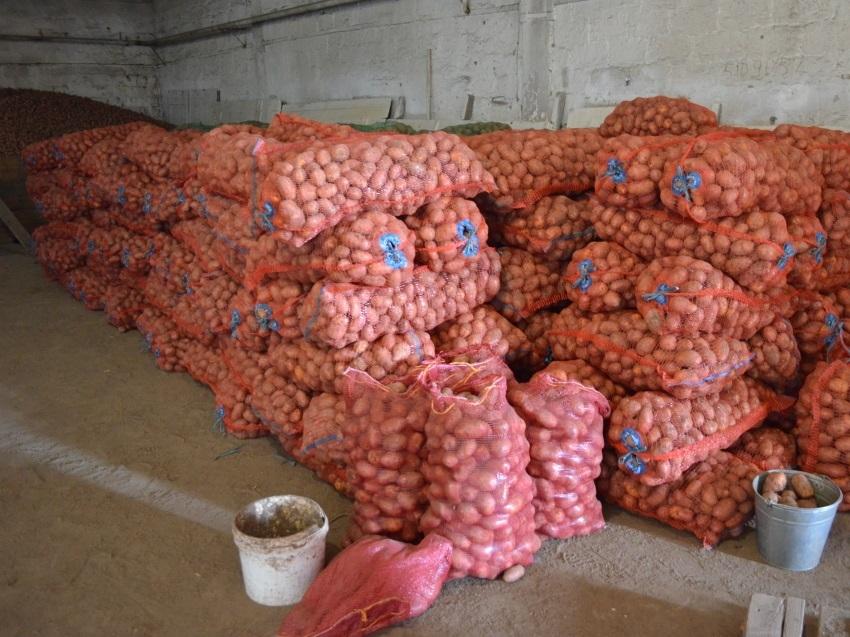 Аграрии Забайкалья по итогам уборки получили почти девять тысяч тонн картофеля
