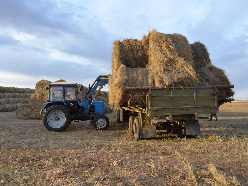 Минсельхоз края ведет работу по компенсации затрат на доставку сена нуждающимся хозяйствам