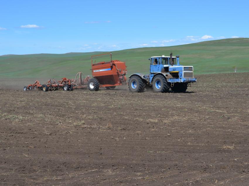 Посевы зерновых культур в Забайкалье за год увеличились на 4,6%