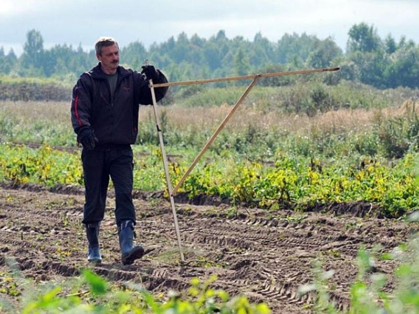 Дальневосточный гектар чаще всего получают в Читинском,Карымском и Нерчинском районах