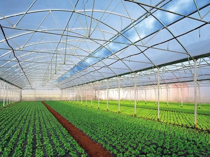 Круглогодичные теплицы по выращиванию овощей и зеленых культур планируют построить в Забайкалье