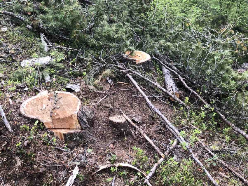 Сегодня на публичных обсуждениях правоприменительной практики в Минприроды Забайкальского края рассматривались результаты работы отдела организации государственного надзора и охраны леса за 2019-2020 годы по предотвращению нарушений лесного законодательства