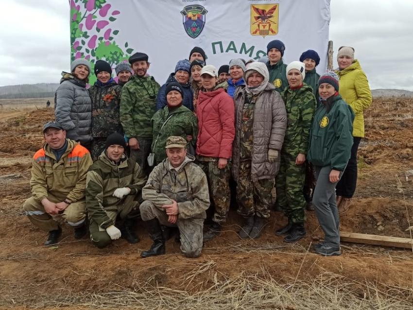 В Забайкалье высадили более 20 тысяч сеянцев сосны в память о героях ВОВ