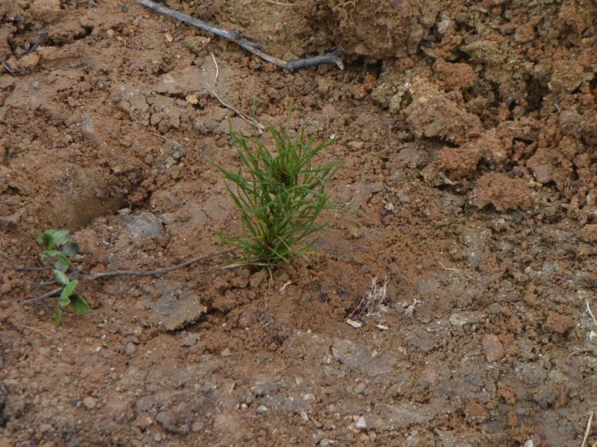В Забайкальском крае проводятся лесовосстановительные работы