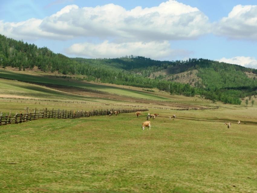 Приграничные территории Забайкальского края в ближайшее время будут доступны по программе «Дальневосточный гектар»