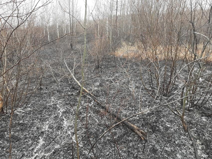 За прошедшие сутки ликвидировано 11 лесных пожаров