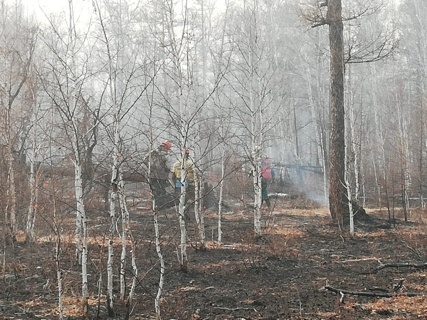 Восемь лесных пожаров ликвидировано за прошедшие сутки