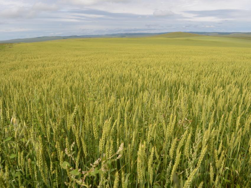 Забайкальские аграрии смогут получить льготные краткосрочные кредиты