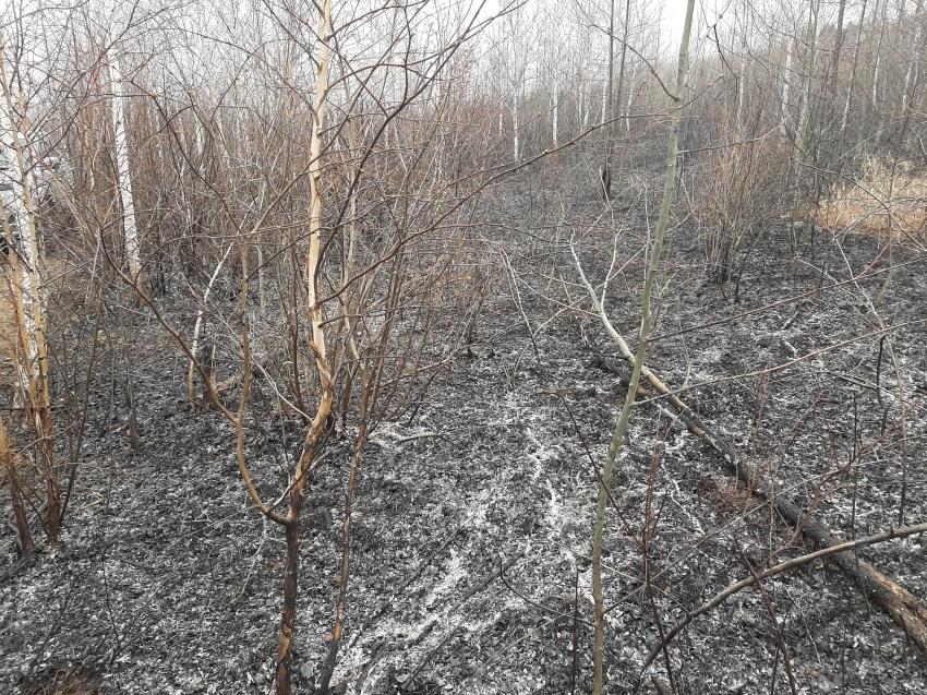 В Забайкалье сократились площадь и количество лесных пожаров