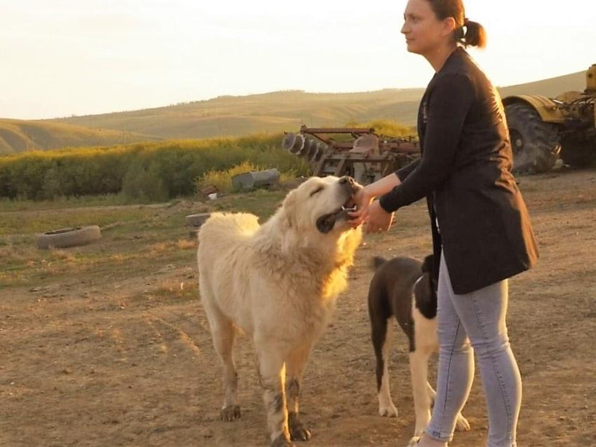 Забайкальская семья из Шилкинского района развивает молочное производство благодаря Дальневосточному гектару