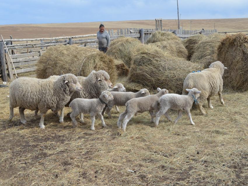 Свыше 26 миллионов рублей направят на развитие семейных ферм в Забайкалье