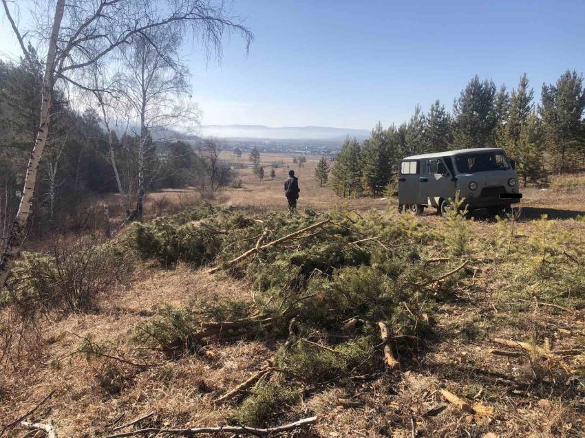 По фактам незаконной рубки деревьев в посёлке Карповка проведут проверку