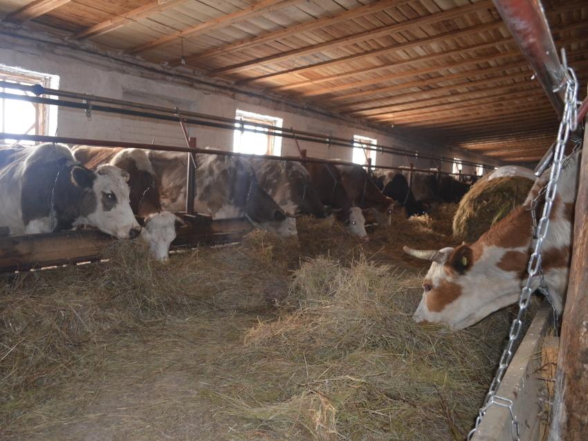 Правительство региона поддержит начинающих забайкальских фермеров субсидиями