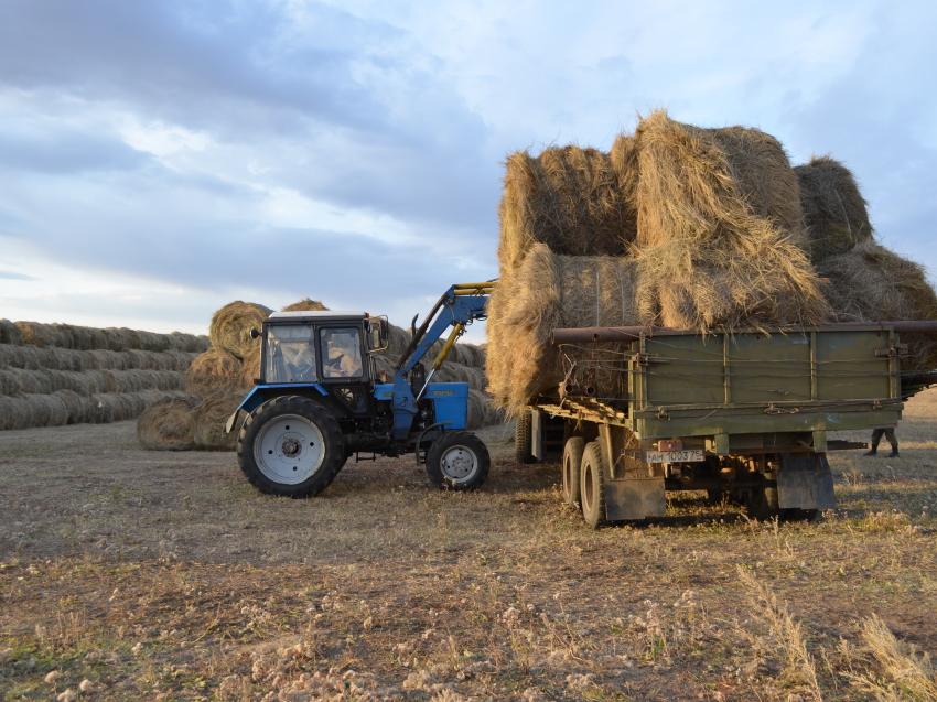 Аграрии Забайкалья готовы реализовать 2,5 тысячи тонн кормов нуждающимся хозяйствам