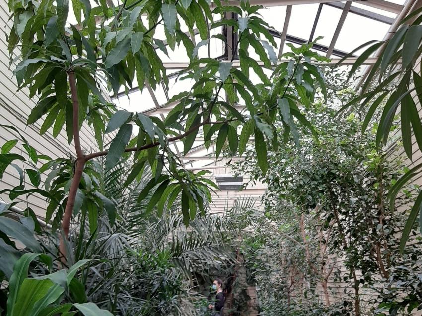 Тропики в центре Читы – экскурсия по ботаническому саду