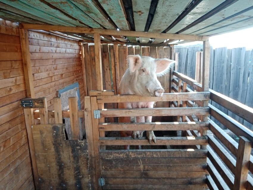 Ветврачи Забайкалья напомнили владельцам животных об опасных последствиях паводка