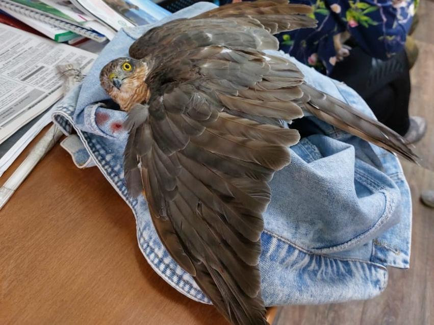 Ветврачи Забайкалья оказали помощь еще одной дикой птице