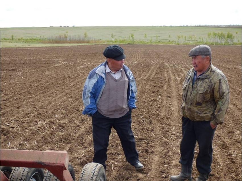 В Агинском районе завершили посев зерновых культур