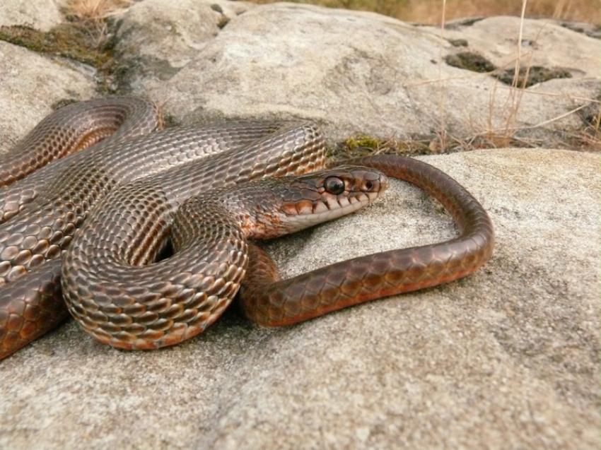 Все виды змей мира фото и названия