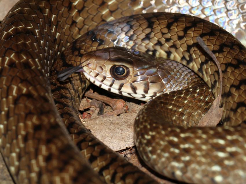забайкальские змеи фото енисейск