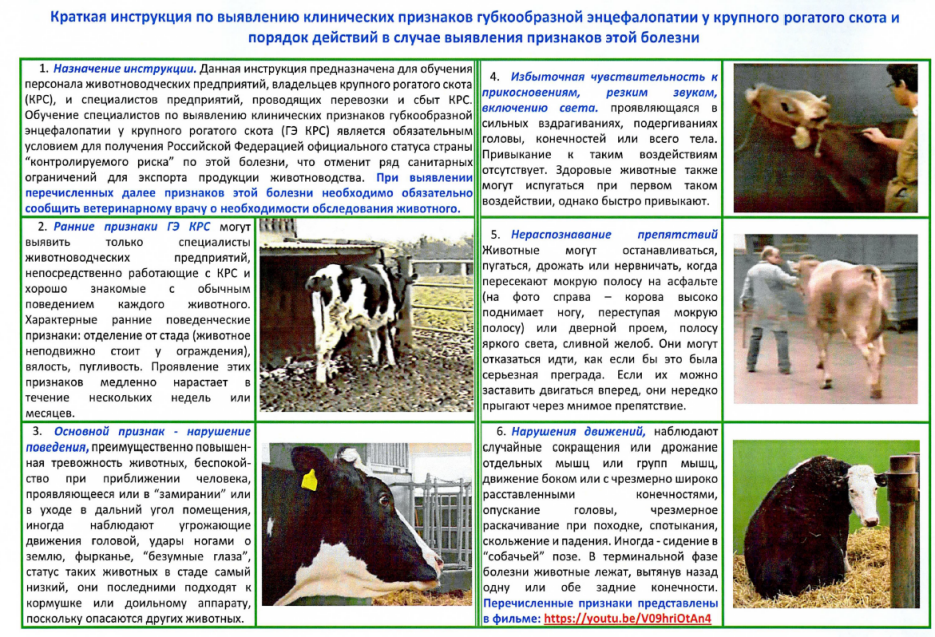 Краткая информация по выявлению клинических признаков губкообразной энцефалопатии у крупного рогатого скота и порядок действий в случае выявления признаков этой болезни