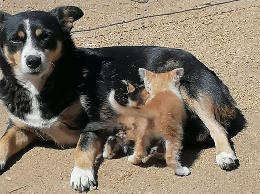 В Нерчинско-Заводском районе Забайкалья собака спасла котят