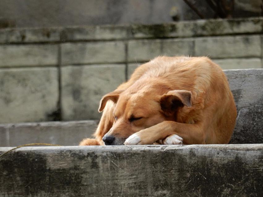 29 миллионов рублей передадут муниципалитетам Забайкалья для отлова и содержания бездомных животных