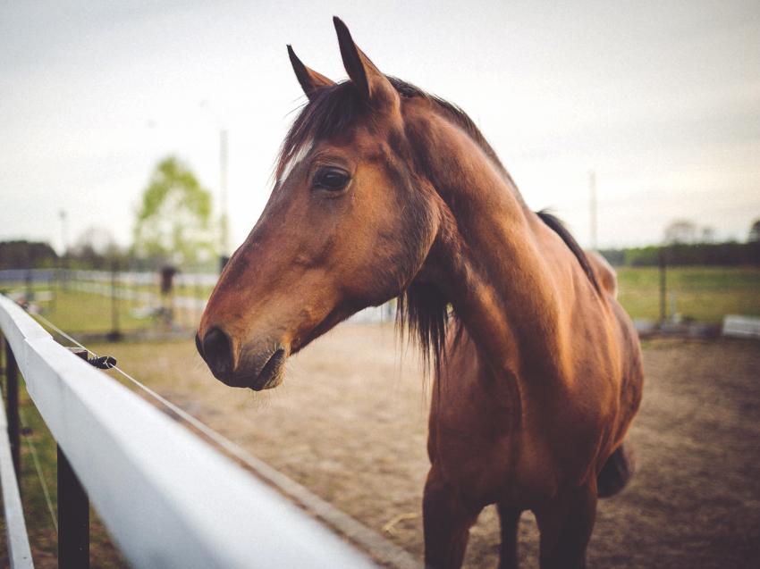 На Читинской госконюшне с 23 апреля введён карантин из-за заболевания животных