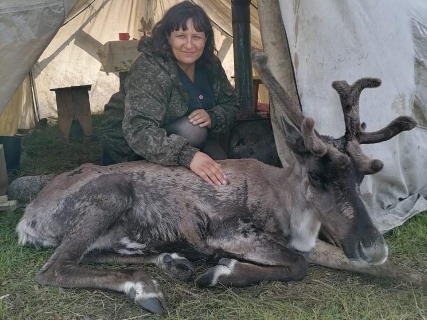 Более полутора тысяч северных оленей исследовали ветврачи Забайкалья в летний период