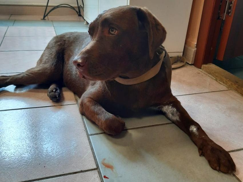 Собака сама пришла к ветврачам за помощью в Чите