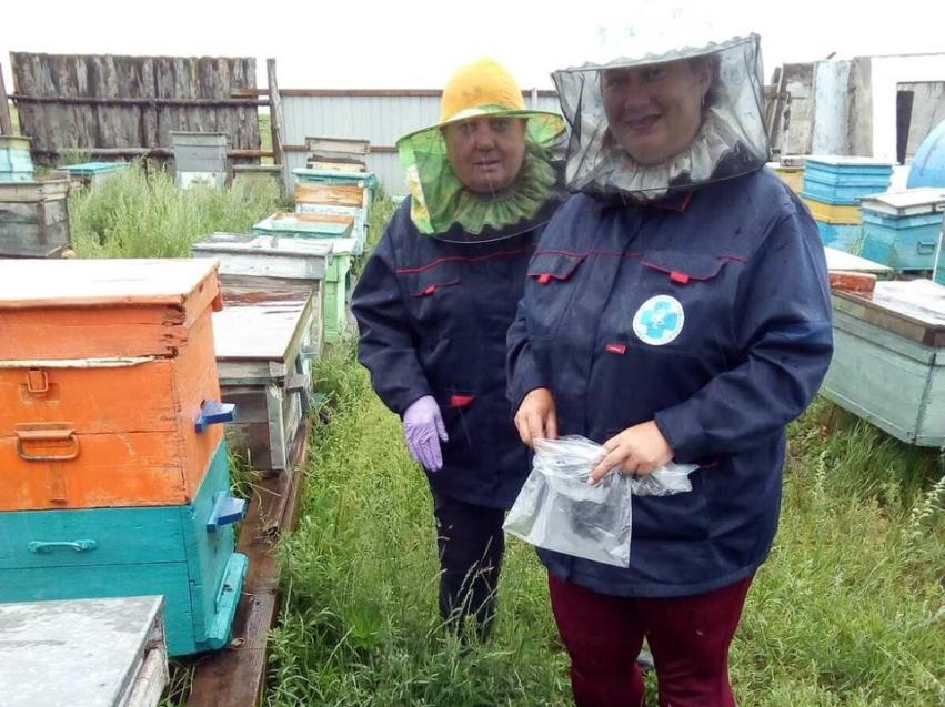 Ветврачи ежегодно следят за здоровьем пчел в Забайкалье