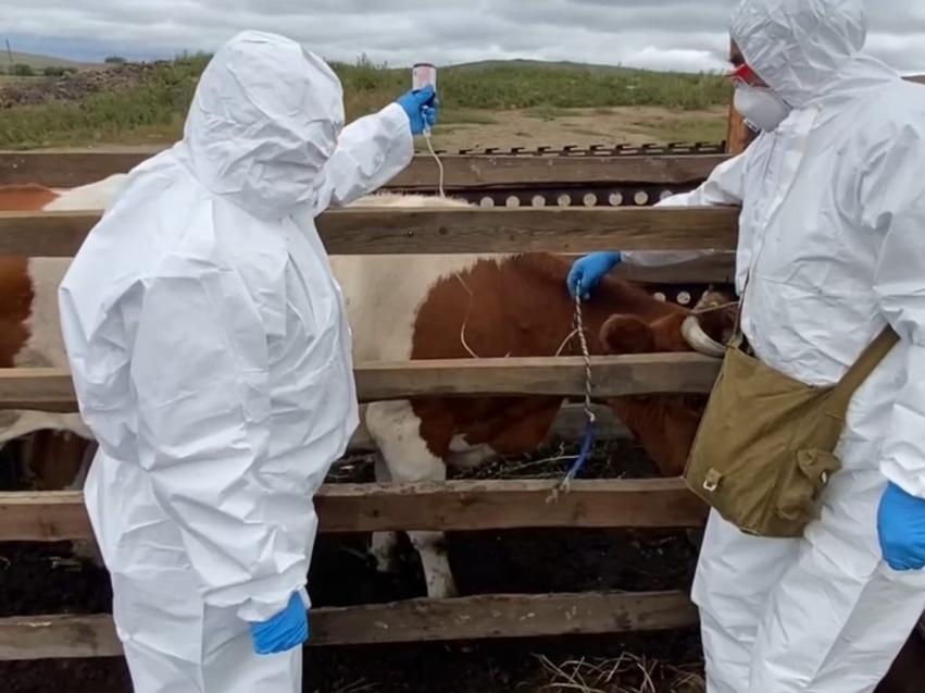 Новый очаг опасной инфекции животных обнаружен еще в одном районе Забайкалья