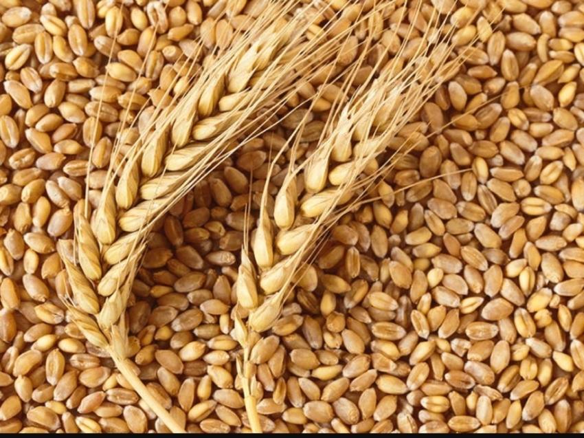 Эксперты: Ввод зернового терминала в Забайкалье будет способствовать росту экспорта