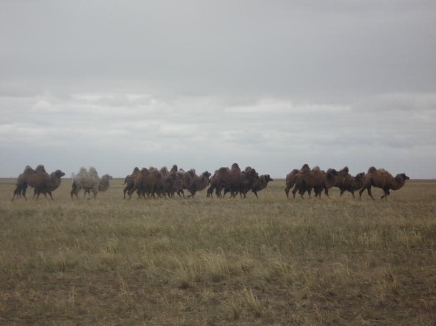Забайкальские аграрии увеличивают  поголовье скота благодаря господдержке