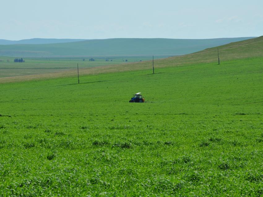 Забайкальские хозяйства обработали от сорняков и вредителей 105 тысяч гектаров посевов