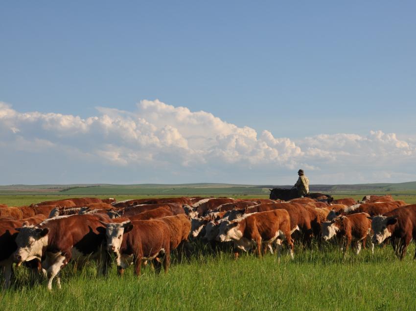 Три забайкальских хозяйства получат гранты на развитие семейных ферм