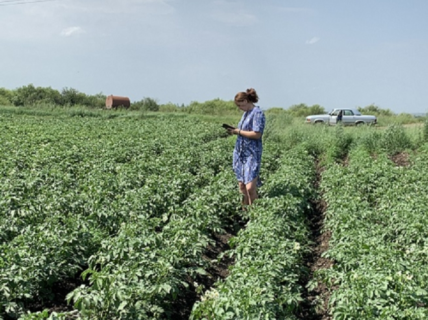 В Забайкалье выявляют вредителей растений с использованием цифровых технологий