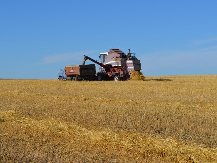 Средняя урожайность зерновых культур в Забайкалье превышает прошлогодние показатели