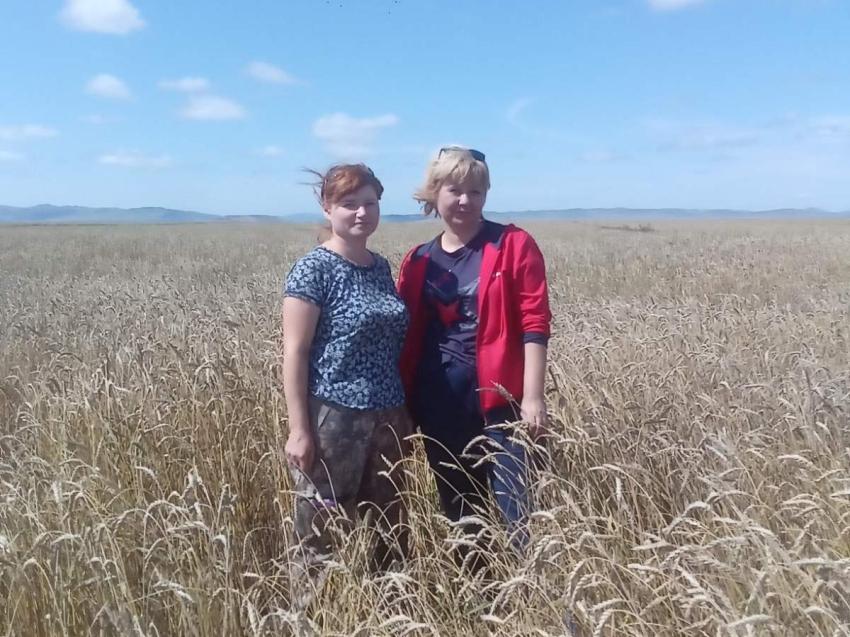 Россельхозцентр по Забайкалью провел апробацию и регистрацию посевов сельхозкультур на площади свыше 30 тысяч гектаров