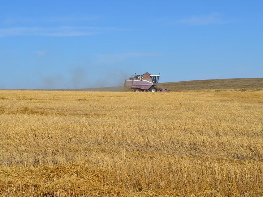 Почти 300 комбайнов убирают урожай в Забайкалье