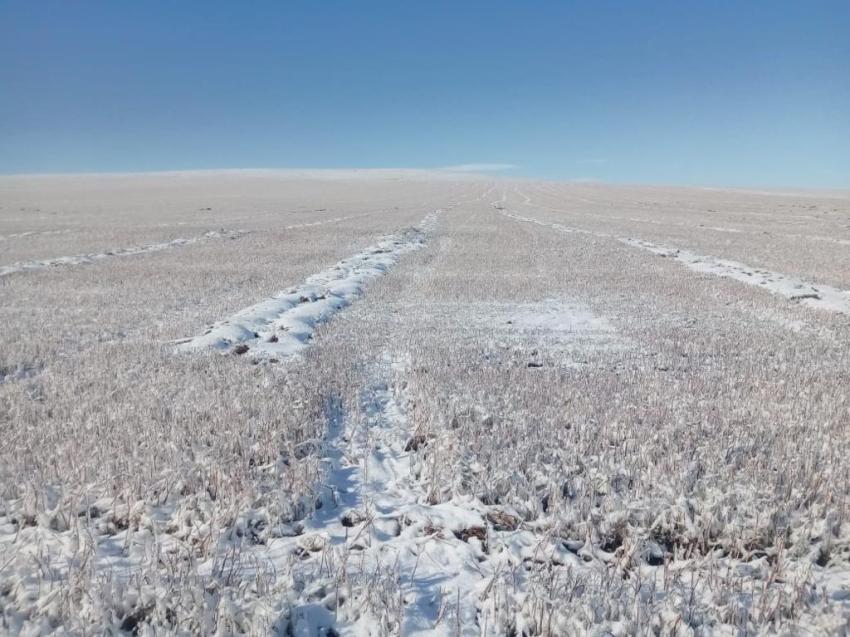Режим чрезвычайной ситуации введен в Забайкалье из-за гибели сельхозкультур