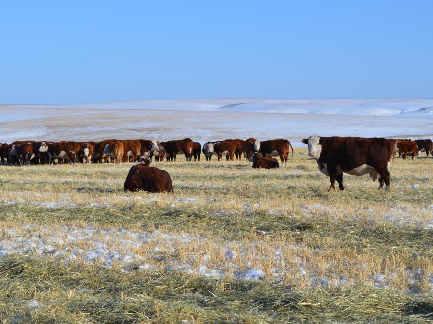 Почти 200 хозяйств Забайкалья получили 31 миллион рублей за прирост сельхозпродукции