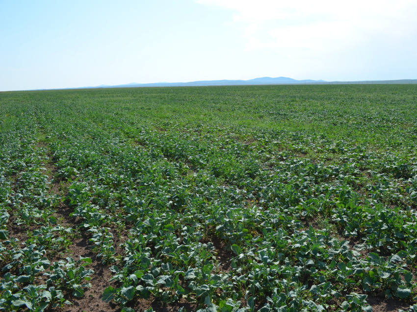 Минсельхоз Забайкалья обратился в антимонопольную службу по недопущению роста цен на удобрения