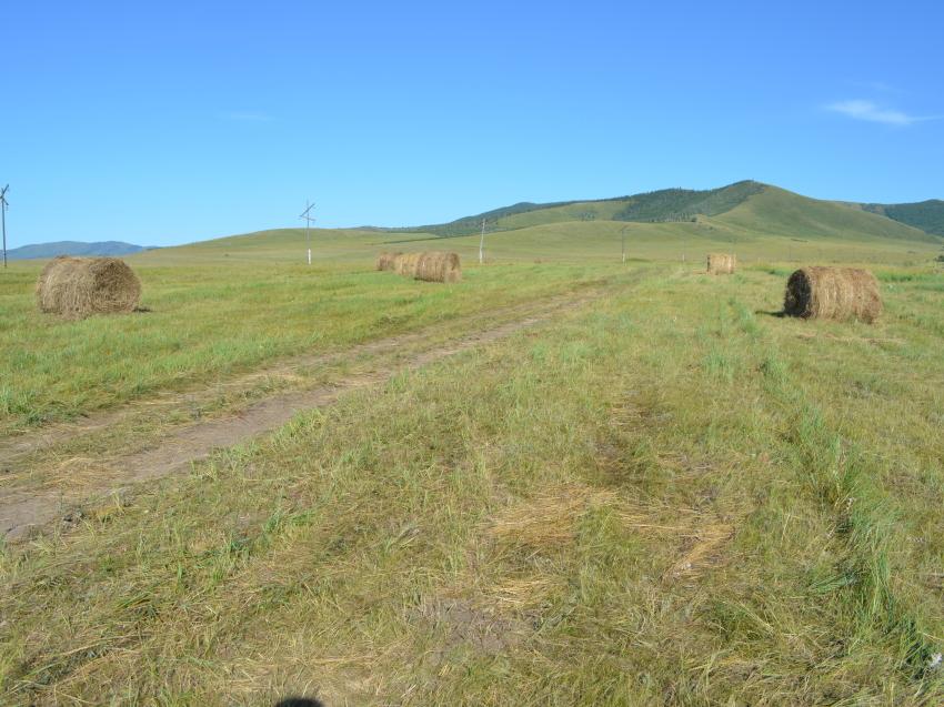 Темпы заготовки кормов в хозяйствах Забайкалья превышают прошлогодний показатель