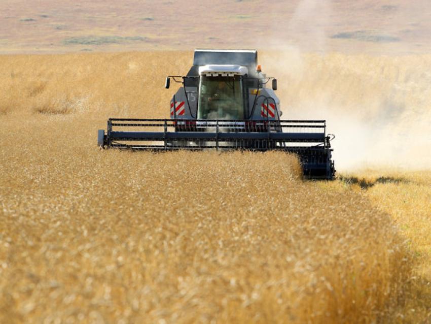 Средняя урожайность зерновых культур в Забайкалье на 15% выше уровня 2020 года